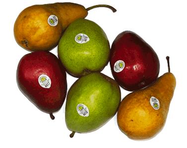 Pears we grow